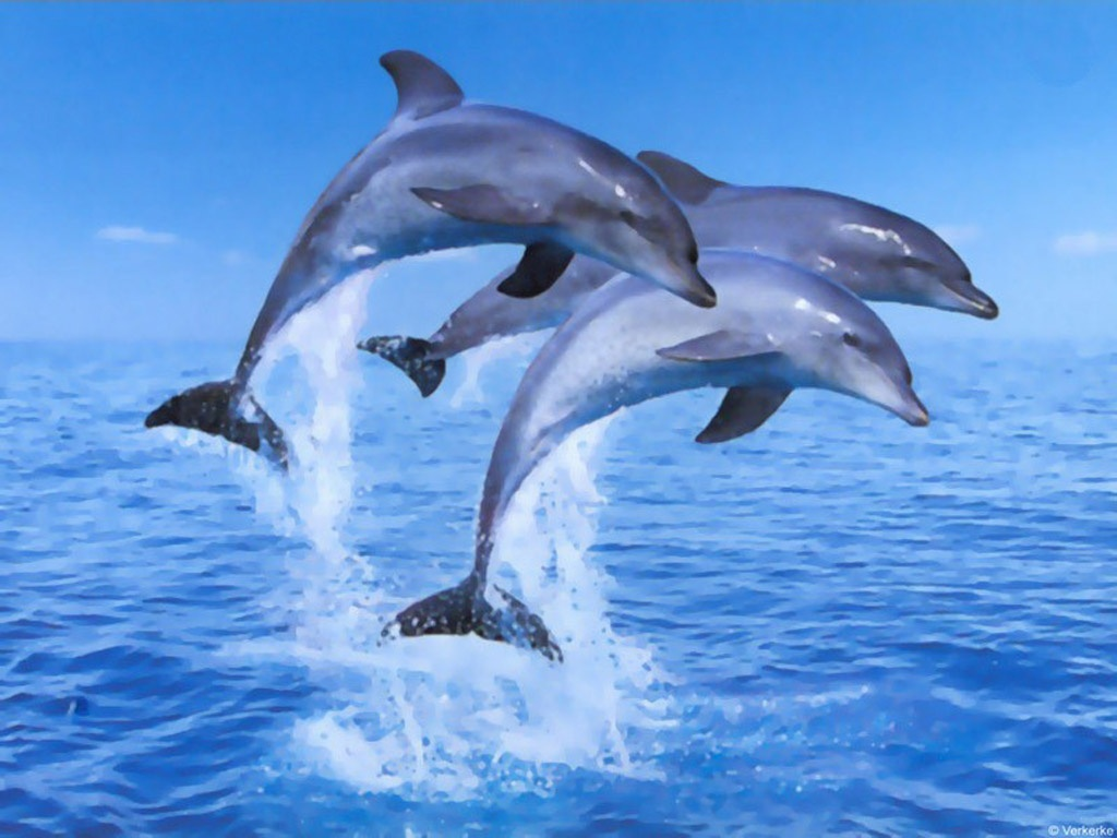 an overview of the dolphins Enjoy a vacation swimming with dolphins in riviera nayarit dolphin  the  experience starts with an overview of dolphin facts, touching upon dolphin history ,.